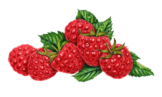 pmm-image-berries
