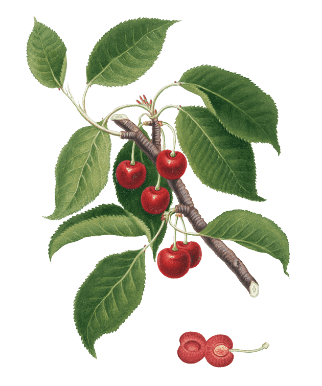 pmm-image-cherries
