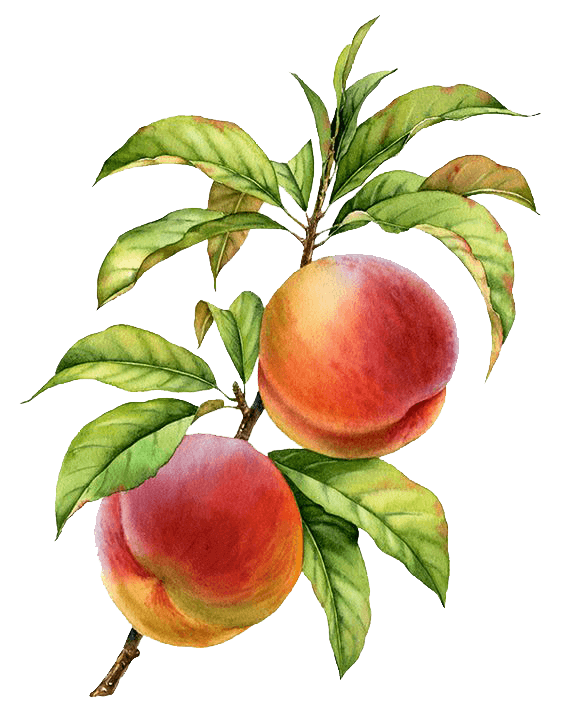 pmm-image-peaches