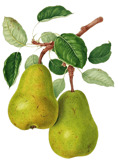 pmm-image-pears