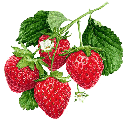 pmm-image-strawberries