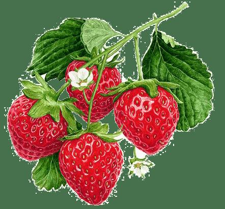 pmm-image-strawberries