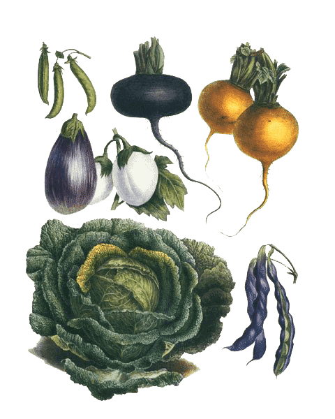 pmm-image-vegetables-other-produce